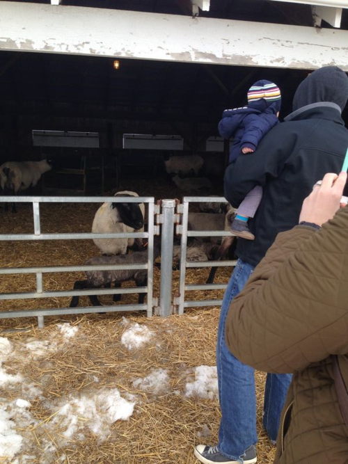 One of the MSU sheep pens.