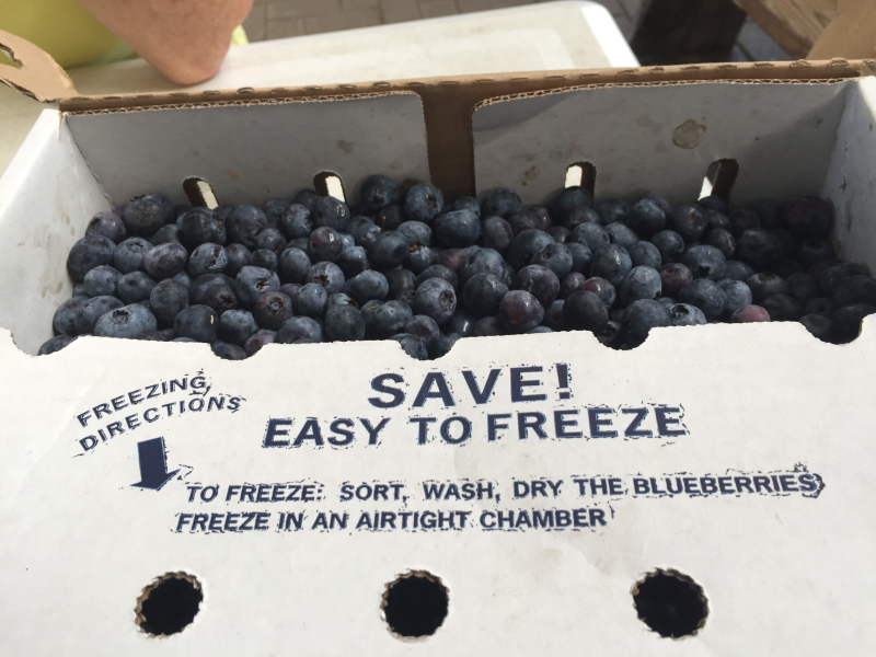 Michigan blueberries in all their glory.