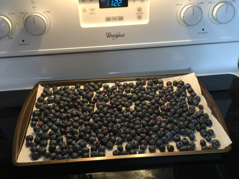 Blueberries drying.